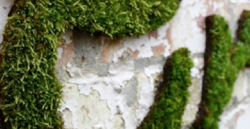 HOW TO MAKE MOSS ART